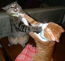 lessons aggressive behavior in cats