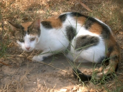 Know Your Cat Diarrhea In Cats
