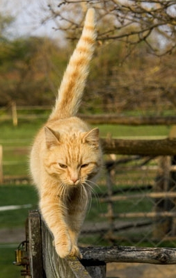 Why Do Cats Swipe Their Tails