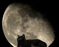 the cat and the moon yeats